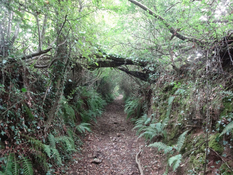 Passaford Lane Devon